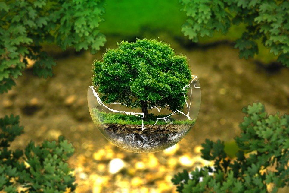 ekologie v kapsli