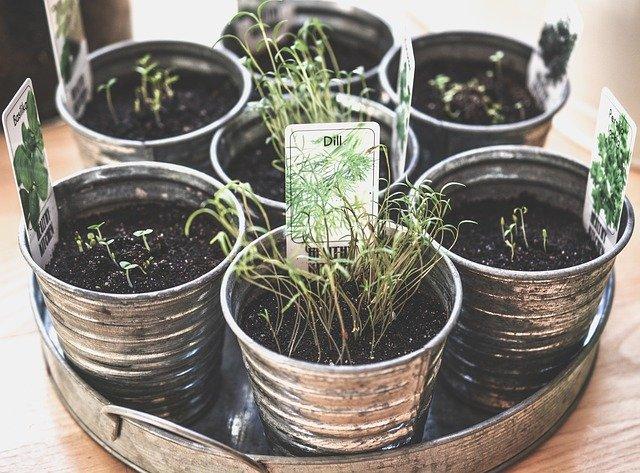 pěstování doma
