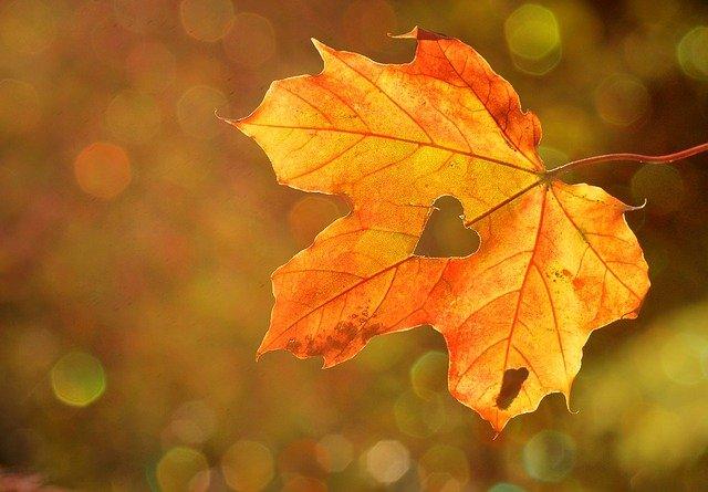 srdce v listě